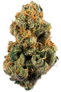 9 Pound Hammer - Indica Cannabis Strain