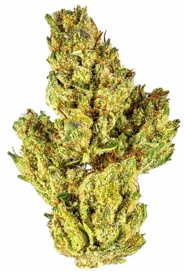 92 Hollywood Hills - Hybrid Cannabis Strain
