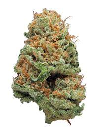 Afgoo - Indica Cannabis Strain