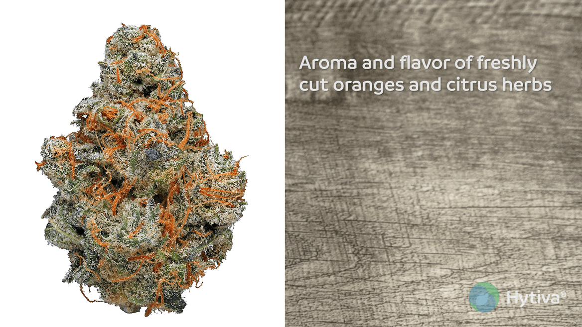 Strain review video: Agent Orange