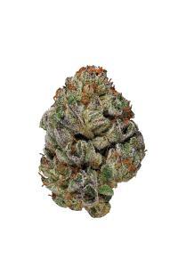 Alien Kush - Hybrid Cannabis Strain