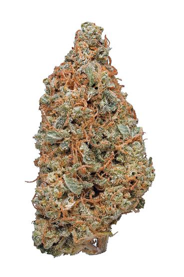 Allen Wrench - Sativa Cannabis Strain