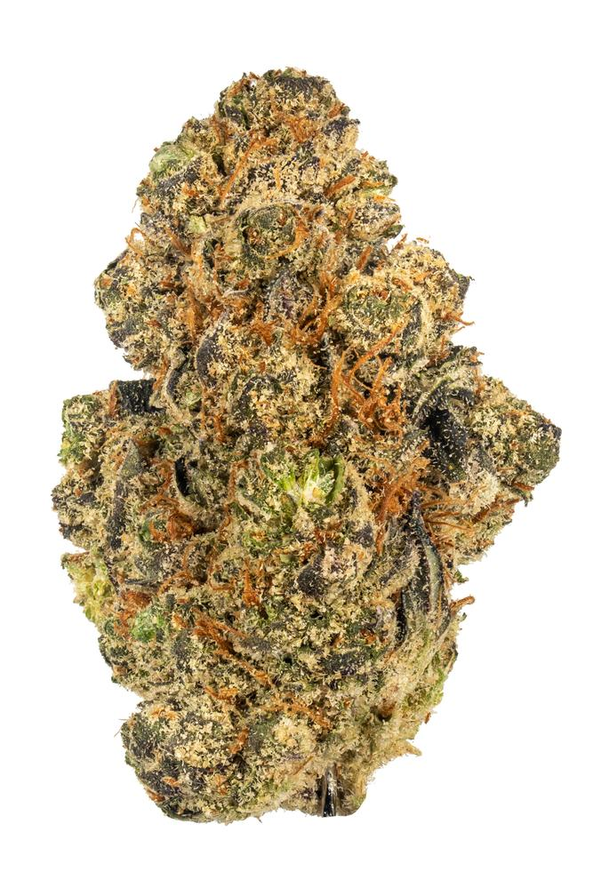 A large, super kiefy nug of the cannabis strain Animal Mints is displayed against a white background. This has a mix of green and dark purple leaves and orange hairs. Photo credit to hytiva.com