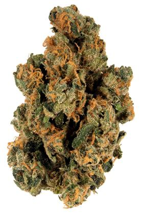 Banana Cream - Hybrid Cannabis Strain