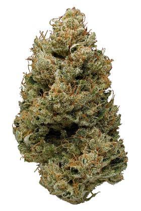 Banana Kush Strain - Hybrid Cannabis Review, CBD, THC : Hytiva