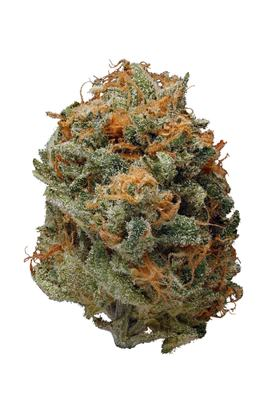 Bay Dream - Sativa Cannabis Strain