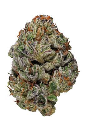 Birthday Cake Strain - Hybrid Cannabis Video, CBD, THC : Hytiva