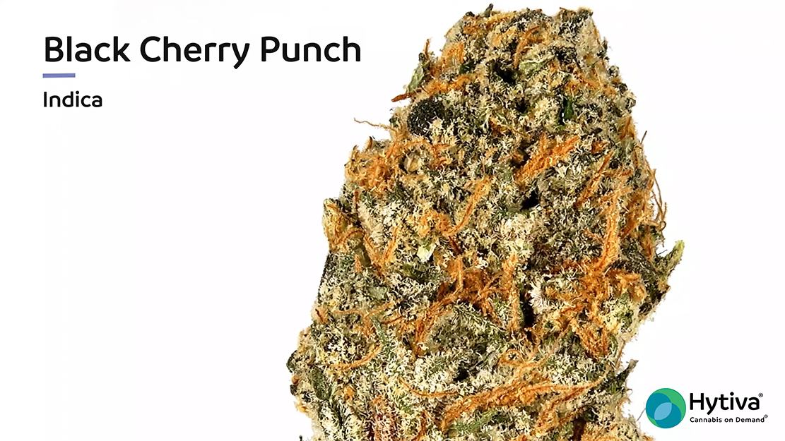 Strain Review Video: Black Cherry Punch