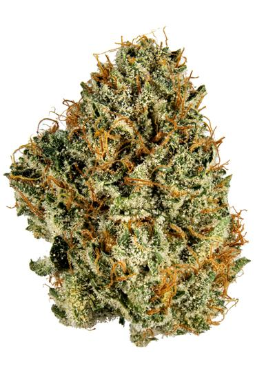 Black Triangle - Hybrid Cannabis Strain