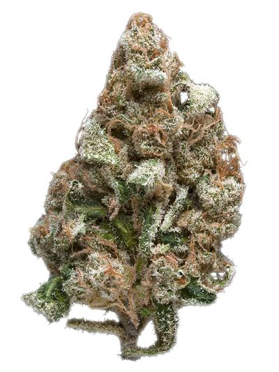 Blackberry Space Queen - Hybrid Cannabis Strain