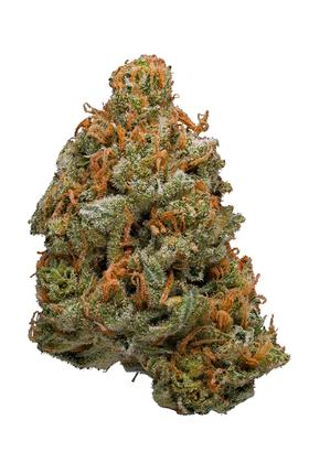 Blackjack - Hybride Cannabis Strain