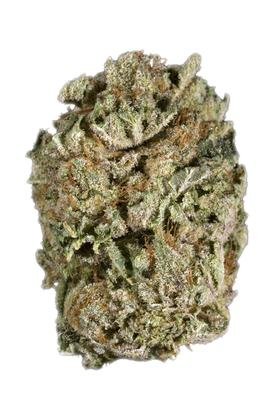 Blowfish - Hybrid Cannabis Strain