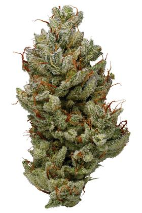 Blue Power - Indica Cannabis Strain