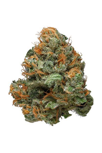 Use Policy >> Blueberry Haze - Hybrid Cannabis Strain Review : Hytiva