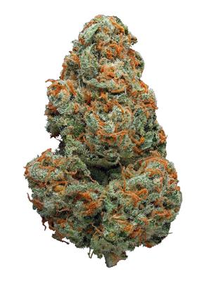 Brainstorm Haze - Sativa Cannabis Strain