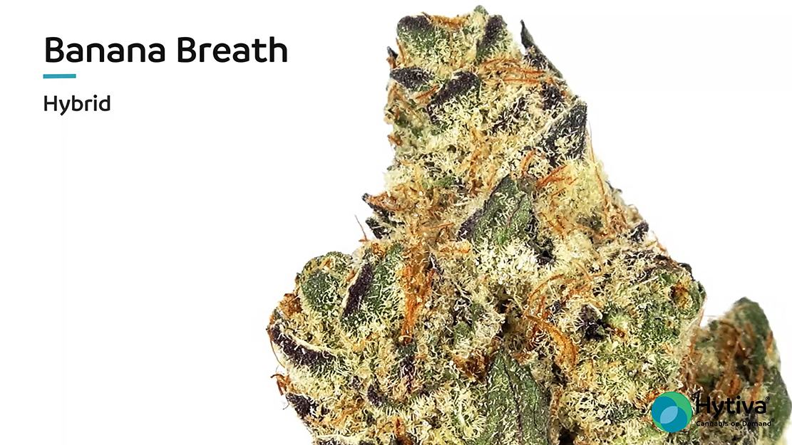 Strain review video: Banana Breath