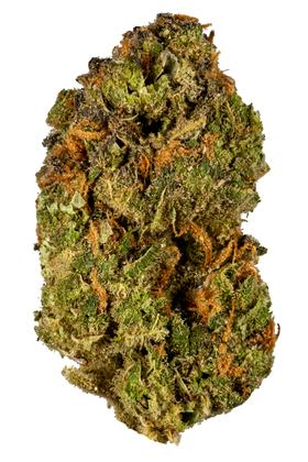 Brian Berry Cough - Hybrid Cannabis Strain