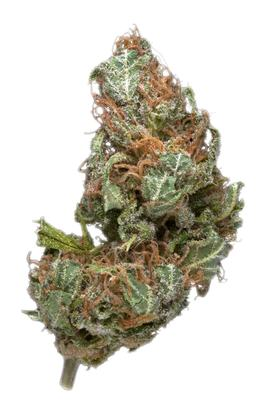 Bubble Cheese - Hybrid Cannabis Strain