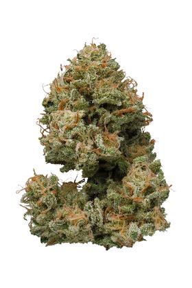 Bubbleberry - Hybride Cannabis Strain