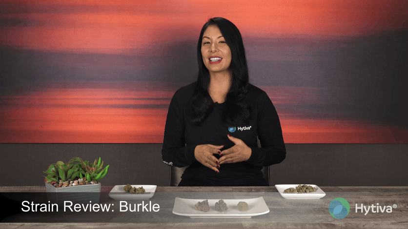 Strain Review: Burkle Youtube Video