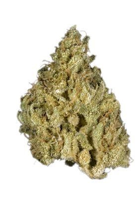 Cali Gold - Sativa Cannabis Strain