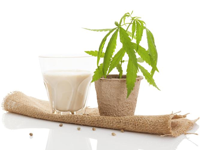 DIY: Cannabis Infused Milk