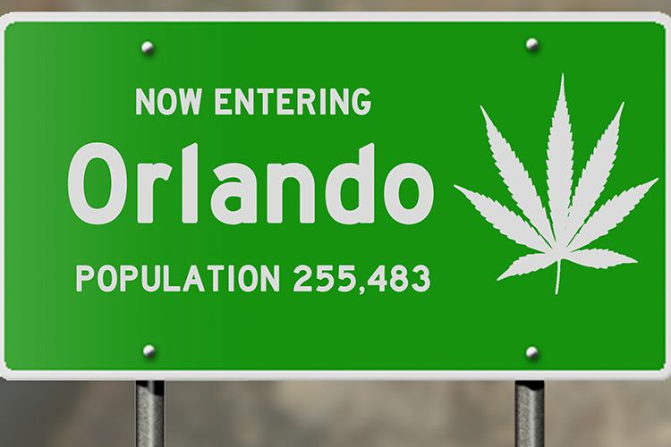 The Next Steps for Cannabis Enthusiasts in Florida