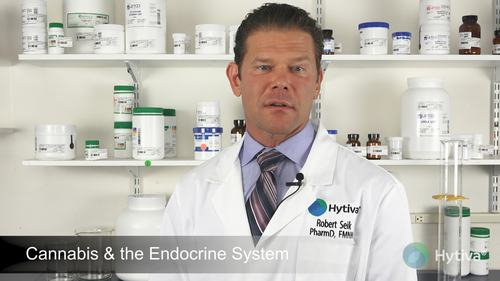 Cannabis & the Endocrine System
