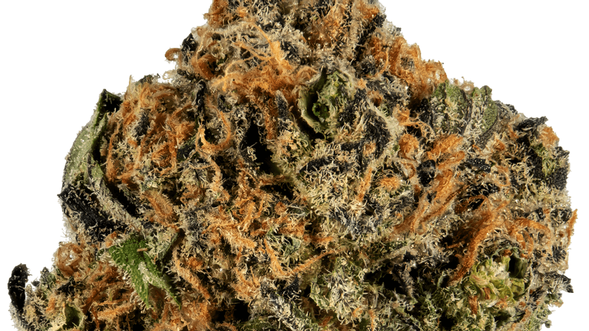 Strain Review: Caramel Apple Kush Youtube Video