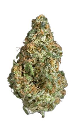 Casey Jones - Sativa Cannabis Strain