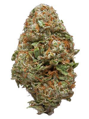 Charlie Sheen - Hybrid Cannabis Strain