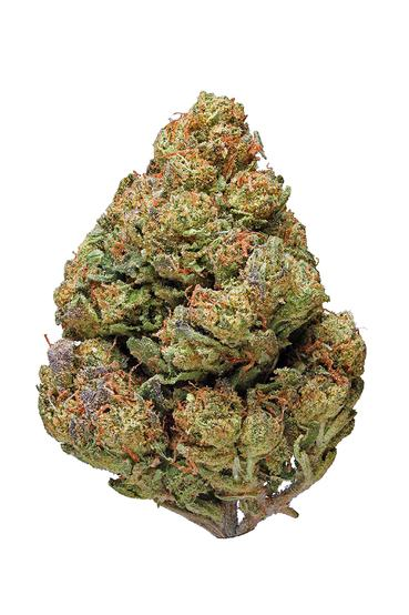 Cheese - Sativa Cannabis Strain