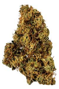 91 Chemdawg - Sativa Cannabis Strain