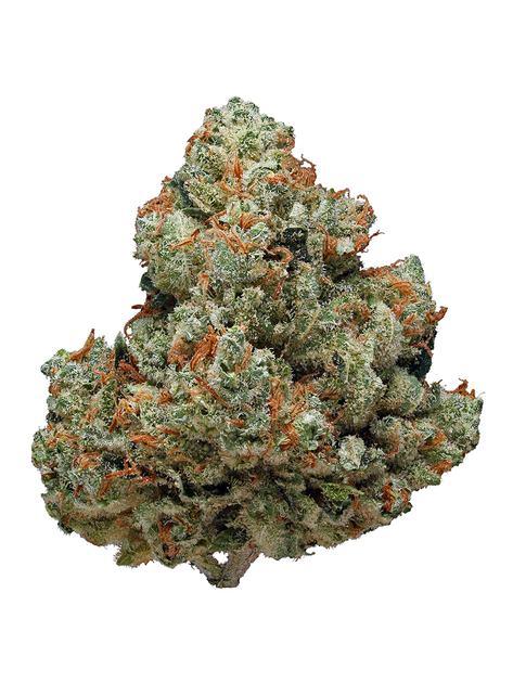 Chemdawg Strain - Sativa Cannabis Review, CBD, THC, Terpenes : Hytiva