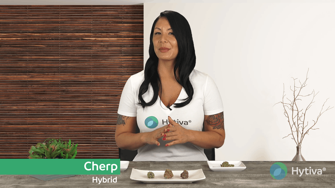 Strain review video: Cherp