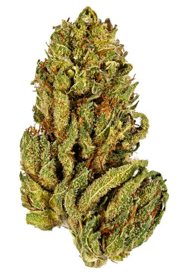 Chocolate Pineapple Scout - Hybrid Cannabis Strain