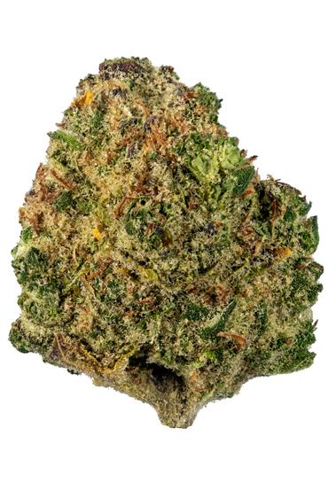 Chocolate OG - Indica Cannabis Strain