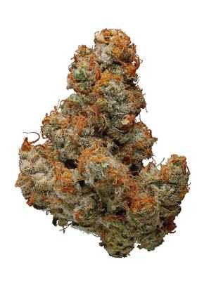 Chocolope - Sativa Cannabis Strain