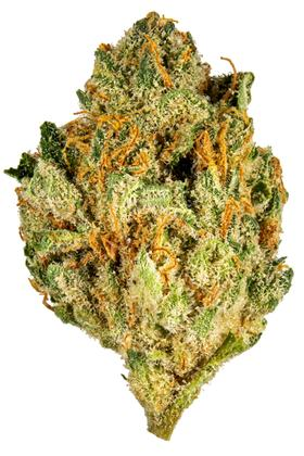 Code Orange - Hybrid Cannabis Strain