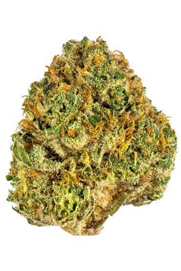 Cookie Supreme - Hybrid Cannabis Strain