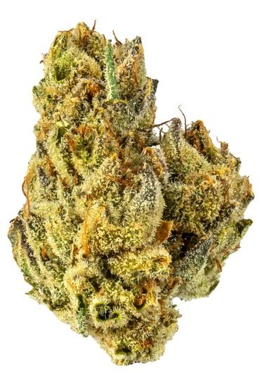Crazy Glue - Hybrid Cannabis Strain