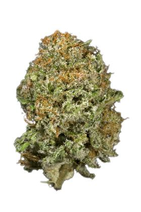 Critical Cheese - Sativa Cannabis Strain