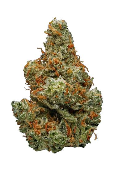 Critical Plus - Hybrid Cannabis Strain