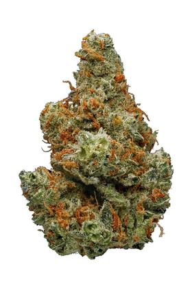 Critical Plus - Híbrido Cannabis Strain