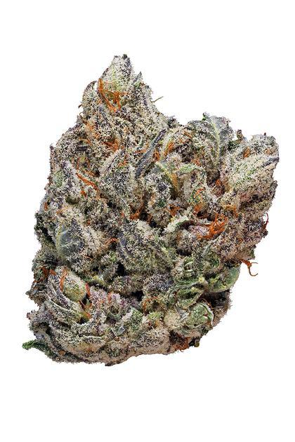 deadhead og  hybrid  cannabis strain effects   stats hytiva thc trichomes harvest thc trichomes close up