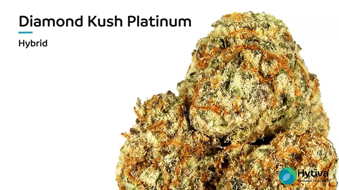 Strain Review Video: Diamond Kush Platinum