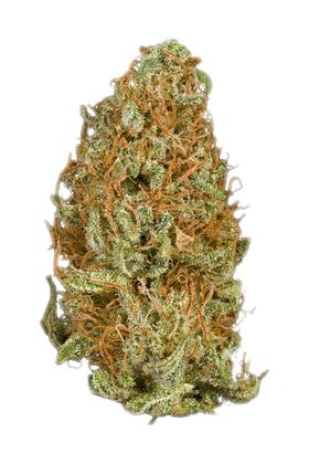 Dragon - Hybrid Cannabis Strain