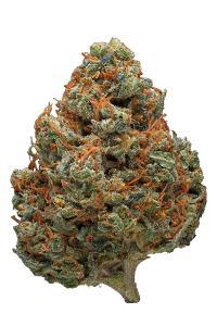 Orange Cookies Hybrid Cannabis Strain Video Cbd Thc Terps Hytiva