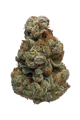 Dutch Treat - Hybrid Cannabis Strain