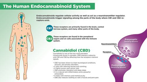 Chronic Disease and Endocannabinoid Deficiency